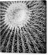 Barrel Cactus Black And White Canvas Print