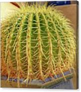 Barrel Cactus Royal Palms Phoenix Canvas Print
