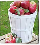 Basket Of Honey Crisp Apples Canvas Print