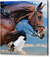 Bay Horse In Jumping Show Against Blue Canvas Print