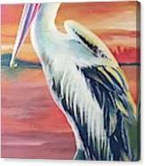 Bayou Pelican / Modern Ibis Canvas Print