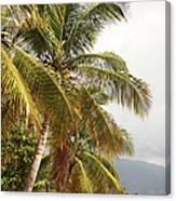 Beach In Haiti Canvas Print