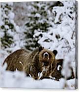 Bear In The Snow Canvas Print