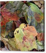 Beauti Fall Canvas Print