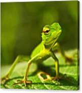 Beautiful Animal In The Nature Habitat Canvas Print