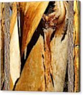 Beautiful Bark  Canvas Print