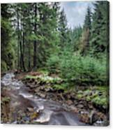 Beautiful Ethereal Style Landscape Image Of Small Brook Flwoing  Canvas Print