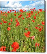 Beautiful Fields Of Red Poppies Canvas Print