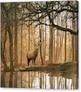 Beautiful Landscape Image Of Still Stream In Lake District Fores Canvas Print