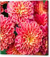 Beautiful Of Red Garden Dahlia Flower Canvas Print
