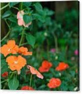 Beautiful Orange Flower, Naturally Canvas Print