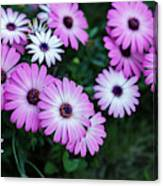 Beautiful Pink Flowers In Grass Canvas Print