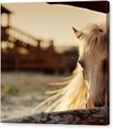 Beautiful, Quiet, White Horse Waits In Canvas Print
