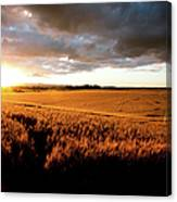 Beautiful Sunset Over Ripe Wheat Field Canvas Print