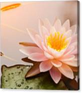 Beautiful  Waterlily Or Lotus Flower Canvas Print