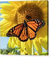 Beauty On The Sunflower Canvas Print