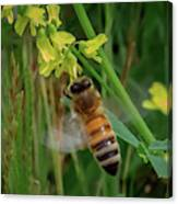 Bee And Flower Canvas Print