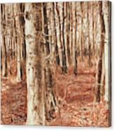 Beech Forest Canvas Print