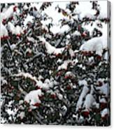 Berries And Snow Canvas Print