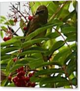 Berries And Waxwing Canvas Print