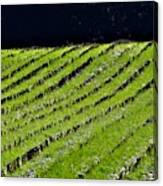 Between The Rows Canvas Print