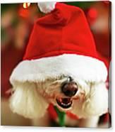 Bichon Frise Dog In Santa Hat At Canvas Print