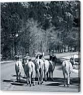 Bighorn Sheep Ovis Canadensis Walking Canvas Print
