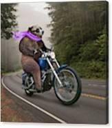 Biker Bear Canvas Print
