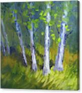 Birch Light Landscape Canvas Print