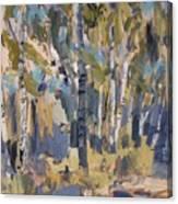 Birch Trees Along The Pond De Melle Canvas Print