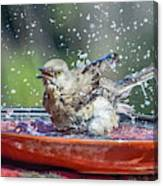 Bird In A Bath Canvas Print