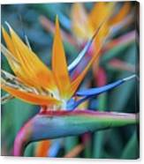 Bird Of Paradise Flowers Canvas Print