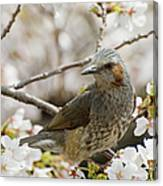 Bird Perched Among Cherry Blossoms Canvas Print
