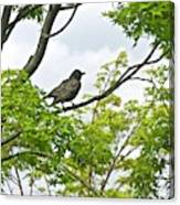 Bird Resting On Branch Canvas Print