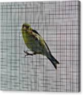 Bird Watching Reversed Canvas Print
