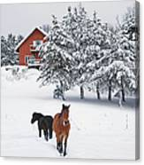 Black And Brown Horse Canvas Print