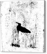 Black Ivory Actual 1b23z Canvas Print