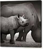 Black Rhinoceros Baby And Cow Canvas Print
