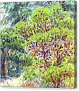 Blake Garden, Berkeley Ca Canvas Print