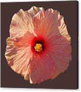 Blooming Hot Canvas Print