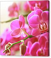 Blooming Pink Orchid On A Green Branch Canvas Print