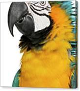 Blue And Yellow Macaw, Ara Ararauna Canvas Print