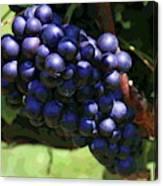 Blue Grape Bunches 5 Canvas Print