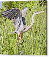 Blue Heron On The Rise Canvas Print