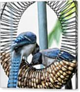 Blue Jays Wooing 1 Canvas Print