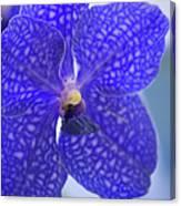 Blue Vanda Orchid Flower Close-up Canvas Print