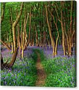 Bluebells In Sussex Canvas Print