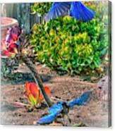 Bluejays Landing San Pedro Canvas Print