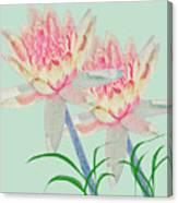 Blush Of Pink Canvas Print