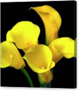 Bouquet Of Yellow Calla Lilies Canvas Print